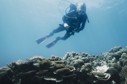 """Dalle Dolomiti ai Caraibi fino alla Tanzania, per scoprire """"Il segreto degli oceani"""""""